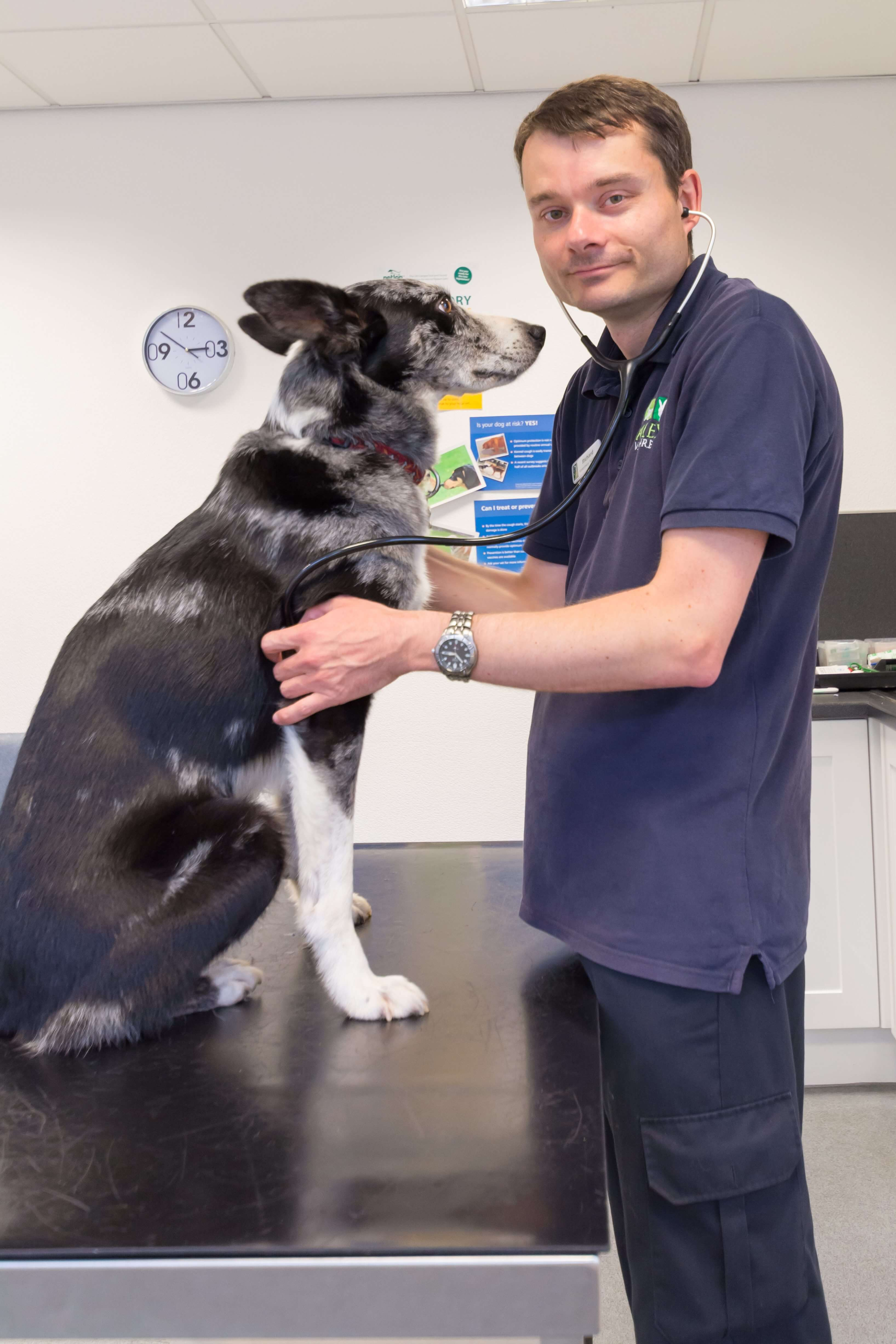 Valley Vetcare Vets In Rochdale Health Plans And Consultation Plans
